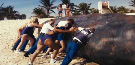 Reno Whale